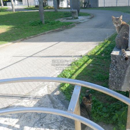 cat20210216IMGP1282.jpg
