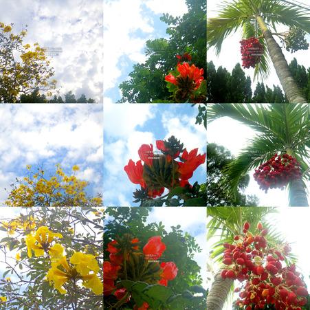 flower20210314.jpg