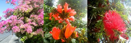 flower20210323.jpg