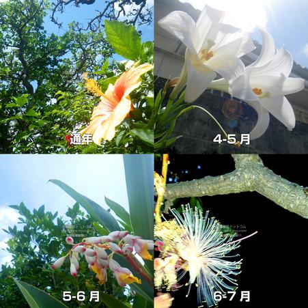 flower20210428.jpg