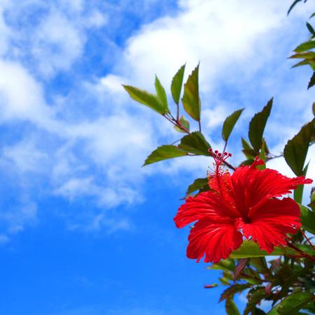 hibiscus20190530e.jpg
