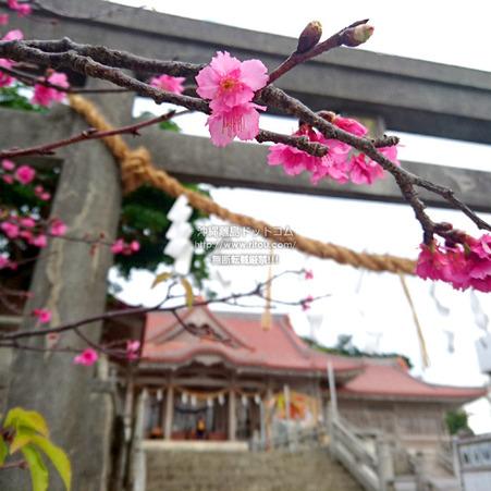 sakura-futenmaguu20190120.jpg