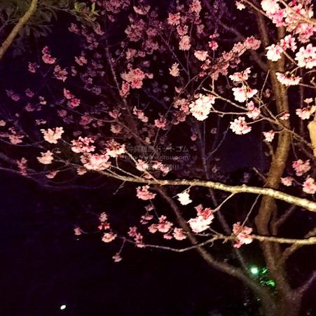 sakura20210206sueyoshi0432.jpg