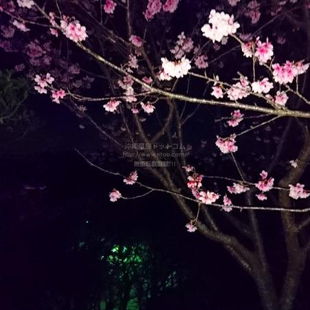 sakura20210206sueyoshi0433.jpg