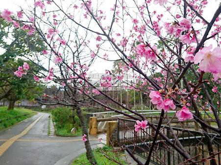 sakurayogipark20190213c3.jpg