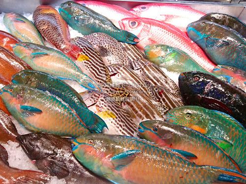 fish20200524082740.jpg