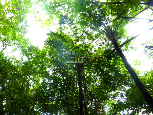 W_P1030088.jpg