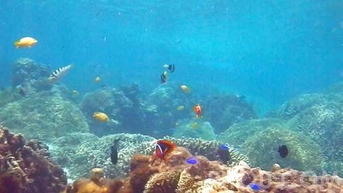 aka2014_coralfish.jpg